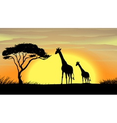 Giraffe in a beautiful nature vector image vector image