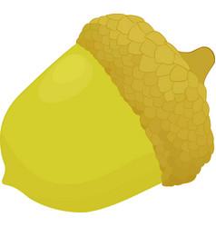 acorn icon symbol vector image