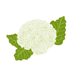 Cauliflower icon in hand drawn flat style vector