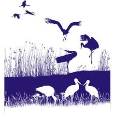 Storks on shore vector