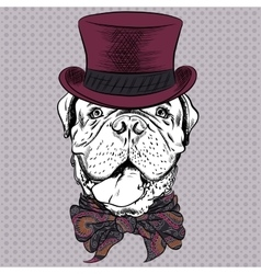 funny cartoon hipster dog French Mastiff vector image vector image