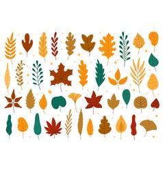 Autumn leaves oak maple elm dry fallen leaf vector