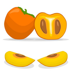 The persimmon vector