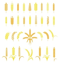 Set of simple and stylish Wheat Ears icons vector image vector image