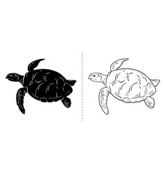 sea turtle hand drawn turtle isolated on white vector image