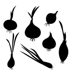 set silhouettes onions collection of vector image