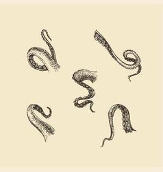 Tentacle drawings set feeler sketches vector