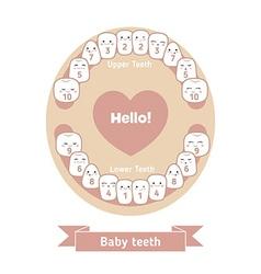 Baby teething chart vector image