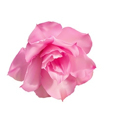 Desert rose flower on white vector