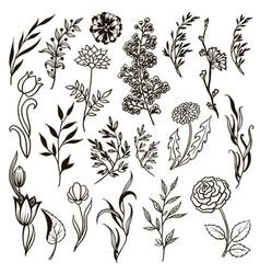 set plants doodle herbs flowers vector image