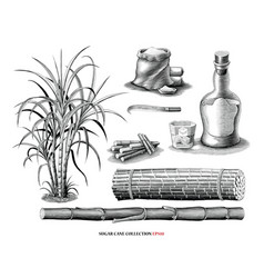 Sugar cane tree with product collection vintage vector