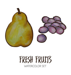 watercolor pear and grapes vector image