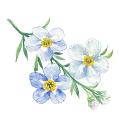 Branch of blue forget-me-not vector image vector image