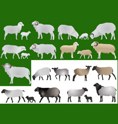 Collection of farm animals - sheeps rams and lamb vector