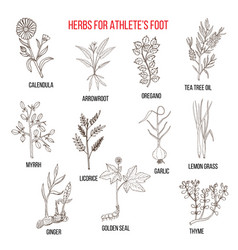 Collection of herbs for athlete foot vector
