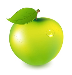 Green Apple With Water Drop vector image