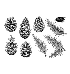 Pine cone and fir tree set Botanical hand drawn vector