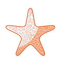 starfish tropical isolated icon vector image