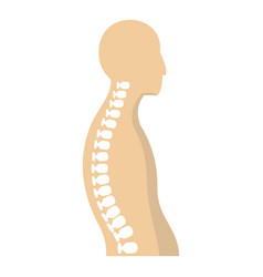 human spine icon isolated vector image