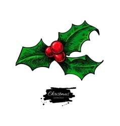 Christmas mistletoe holly berry with leaves Hand vector image