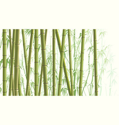 horizontal with many bamboos vector image