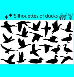 Silhouettes ducks vector