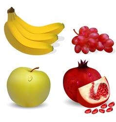 fruits apple banana grapes and pomegranates vector image