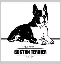 Boston terrier dog - for t vector