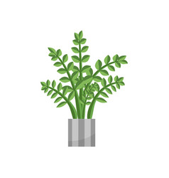 fernhouse plant realistic icon for interior vector image
