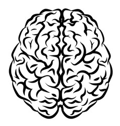 human brain view from above vector image