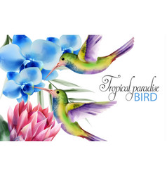 watercolor tropical paradise birds with colorful vector image
