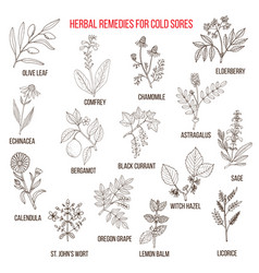 Best herbal remedies for cold sores vector