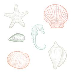 Hand drawn seashells vector