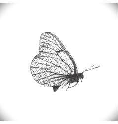 aporia crataegi butterflies vector image