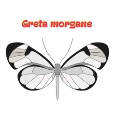 Butterfly greta morgane vector