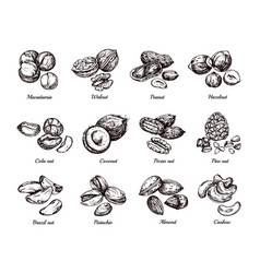 hand drawn nuts and seeds doodle sketch peanut vector image