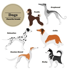 Image set of dogs greyhound russian hound husky vector