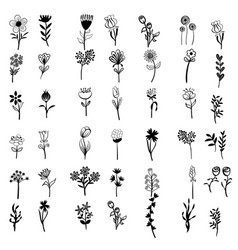 set flower hand drawn silhouette vector image