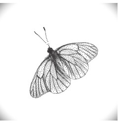 Aporia crataegi butterflies vector
