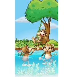Cartoon Playing Monkeys vector image