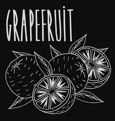Chalkboard ripe grapefruit fruit vector
