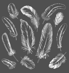 Feathers set hand drawn vector