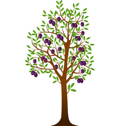 plum tree vector image