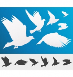 flying birds silhouette vector image vector image