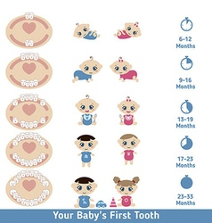 Baby teething chart vector