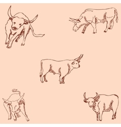 Bulls Sketch pencil Drawing by hand Vintage vector image