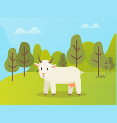 horns animal goat in forest wildlife vector image