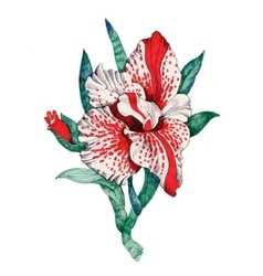 Painted bouquet of garden flowers on white vector image