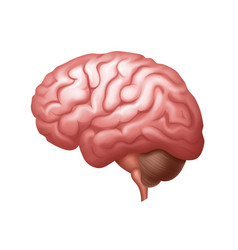 Pink human brain side view close up vector