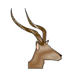 portrait head impala africa mammal wild vector image